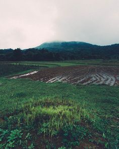 After the Rain #sakleshpur #westernghats #friends #grasslands #karnataka ________________________________________ - - - - - - ________________________________________ #shyamanan ________________________________________ #landscape #landscapeindia #landscapephotography #nature #naturephotography #naturelovers #ruralindia #lonelyplanetindia #indiatravel #indianstories #indiatourism #_indiasb #ig_india #india_tourism_ #incredibleindia #india_91 #India_Gram #natgeoyourshot #indiagram  #instagood…