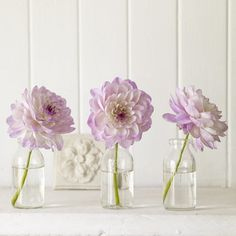 Violet Dahlias and glass vases