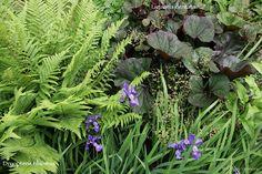 Dryopteris filix-mas with Ligularia dentata and Iris sibirica