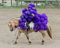 These Hilarious Horse Halloween Costumes Are The Craziest Thing Ever! Horse Halloween Costumes, Pet Costumes, Cool Costumes, Costume Ideas, Animal Costumes, Horse Fancy Dress, Fjord Horse, Usa Holidays, Cute Horses