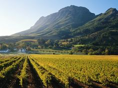 This image may contain Nature, Outdoors, Countryside, Farm, Rural, and Vineyard African Holidays, South African Wine, Namibia, Garden Route, Wale, Out Of Africa, Honeymoon Destinations, Honeymoon Ideas, Africa Travel