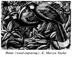 Nga huia, Wellington, by E Mervyn Taylor. Gift of the New Zealand Academy of Fine Arts, Te Papa New Zealand Art, Nz Art, Printable Animals, Paris Images, Maori Art, Country Scenes, Black And White Drawing, Bird Drawings, Wood Engraving