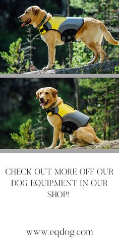 Check out our online shop for more outstanding dog equipment! Walking Equipment, Dog Walking, New Toys, Dog Owners, Your Dog, Swimming, Lovers, Gift Ideas, Check