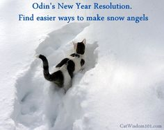 A cat's New Year's resolutions. #cathealth. #cats