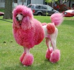 But, you have to remember that you can't use people hair dye on your dog.