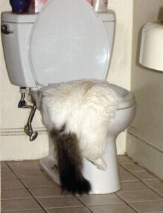 Click here to see more animals suffering from a hangover!