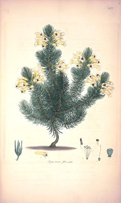 Vintage Printable is another great source for free images, especially of the botanical and animal varieties