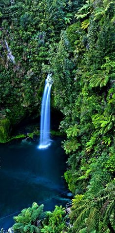 Bill ✔️  Omanawa Falls..... Just a 20 min drive into the Kaimai Ranges, West of Tauranga, New Zealand.     (Great to see, but too dangerous to swim) Bill Gibson-Patmore.  (image, curation & caption: @BillGP). Bill✔️