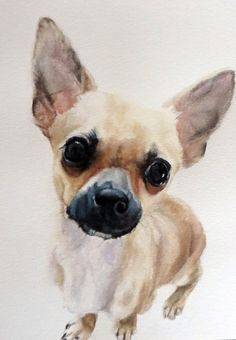 Prince the Chihuahua, Watercolour on Paper - Completed June 2015