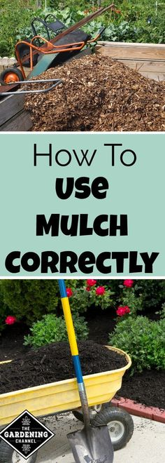 How to use mulch.  Mulch is the best way to help the plants in your garden hold onto moisture.  It also reduces weeds.