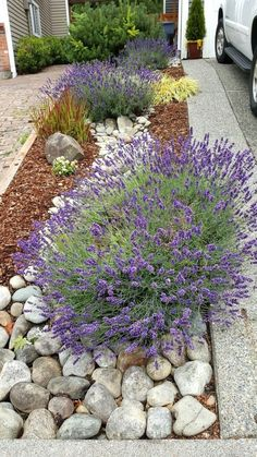 River rock landscape and lavender bush  #LandscapingIdeas