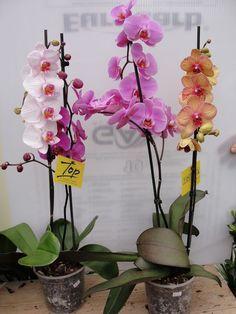 Έχετε υγρασία στο σπίτι σας; Αυτός είναι ο πιο όμορφος και φυσικός τρόπος για να απαλλαγείτε!   Pasmina.gr
