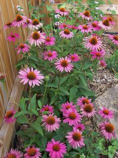 Low Maintenance Plants for Sunny Areas