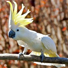 Top 10 Fun Facts About Parrots - Fun Facts You Need to Know!