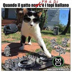 Come fanno i #topi quando il #gatto... c'è! Seguici su youtube/bastardidentro (Clicca in bio) #bastardidentro www.bastardidentro.it