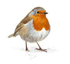 Produkter arkiv - Lars Jonsson Watercolor Animals, Watercolour Painting, Animal Crackers, Bird Illustration, Wildlife Art, Bird Art, Art Pictures, Foto E Video, Animals And Pets