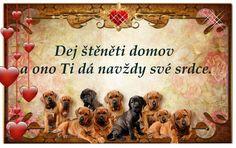 Mojej laruske vsetkooo❤ Humor, Dogs, Humour, Pet Dogs, Funny Photos, Doggies, Funny Humor, Comedy, Lifting Humor