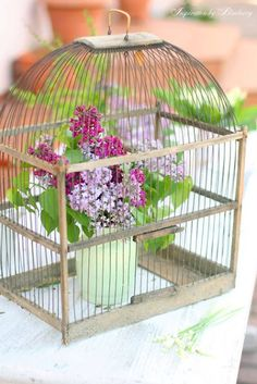 in a bird cage Beautiful Flower Arrangements, Beautiful Flowers, Lilac Flowers, My Flower, Flower Vases, Pastel Room, Bird Cages, Glass Birds, Farmhouse Chic