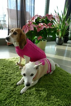 Dogs with a fashion sense