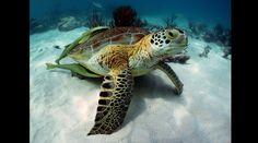 Paraíso animal: descubre el lugar de las tortugas en México | Foto galeria 4 de 6 | El Comercio Peru