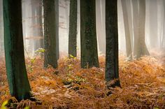 Ferns in a misty forest #Photography   Kozzi Images   Royalty Free Stock Images for just $1