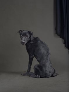 Photographer Tou Chih-Kang Captures Dogs on Death Row | Dogster  Haunting images, an exhibit getting ready to open, a chance to put art in use to effect change in Taiwan.