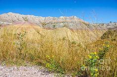 Badlands Jungle on a Seabed by Debra Martz Photography Badlands National Park in SW South Dakota