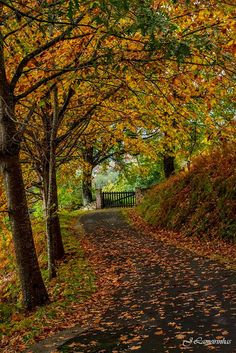 Baztán en otoño... #Navarra  --> http://www.turismo.navarra.es/esp/organice-viaje/recurso/Patrimonio/3066/Valle-de-Baztan.htm