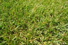 Naturally Kill Crabgrass Without the Use of Chemicals