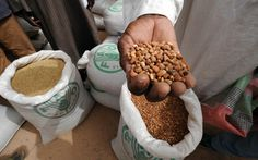 International Year of Pulses 2016 Food Security, Sustainable Food, Lentils, Chickpeas, Protein Sources, Gingerbread Cookies, Nutrition, United Nations, Healthy