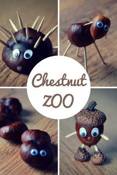 Chestnut ZOO
