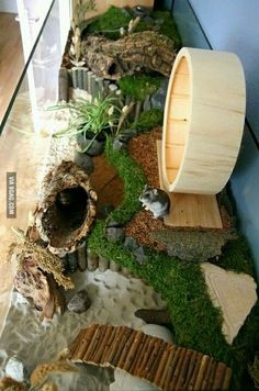 Hamster Paradise!