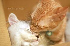 #kittens #horse