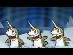 Funny narwhal song