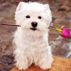 """Képtalálat a következőre: """"kutyus virággal"""""""
