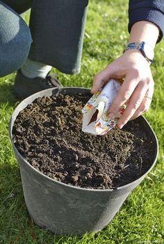Créer un massif pour 3 fois rien avec des vivaces - Détente Jardin Container Gardening, Gardening Tips, Supermarket, Perennials Fabric, Garden Online, Garden Seeds, Geraniums, Permaculture, Horticulture