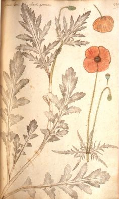 Nature Printed Plants: Fabio Colonna