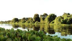 Rio Paraguai -Pantanal-MT