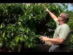 High Density Fruit Tree Growing
