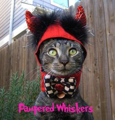 Little Devil costume for cats and dogs by PamperedWhiskers on Etsy https://www.etsy.com/listing/64703147/little-devil-costume-for-cats-and-dogs