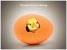 New Life Concept Powerpoint Template is one of the best PowerPoint templates by EditableTemplates.com. #EditableTemplates #PowerPoint #Hatching #Birthday #Animal #Descriptive #Hair #Standing #Bird #Small #Love #Cheerful #Newborn #Birth #Life #Color #Nature #Shell #Nest #New Life #Feather #Broken #Hatch #Chicken Egg #Raw #Young #Cracked #Livestock #Egg #Chicken #Open #Poultry #Fluffy #New Life Concept  #Growth