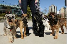 Animals make Vancouver a friendlier, happier city. Should urban planners consider the benefits of pets? #HumanAnimalBond