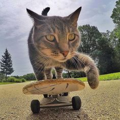 Manny The Selfie Cat Is Our Favorite Feline Photographer -  #cats #cute #gopro #selfie