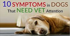 Never Ignore these 10 Serious Warning Dog Symptoms