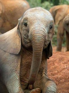 Awe.... Such an adorable baby Elephant""