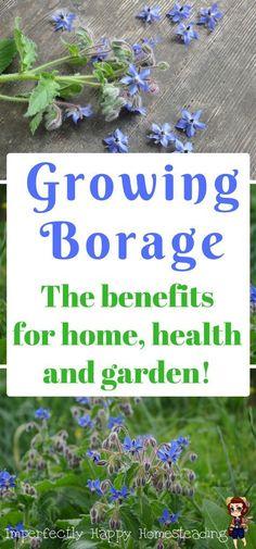 Nursery Bedding Lollipop Lane Herbs Garden Tie-backs And Sheet Pure And Mild Flavor Baby