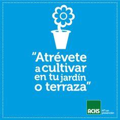 Jardín sustentable en casa #masprevencion #medioambiente