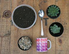 Aprenda como colocar suculentas nas canecas!   #DIY #caneca #suculenta #dicas