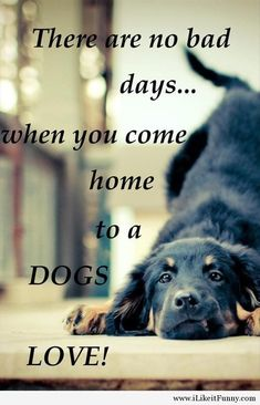 So true :) This is the cutest thing i have ever seen! Love my dog brrrrrrrrrrrrrr shake it baby Baby dogs :) Love My Dog, Puppy Love, Happy Puppy, Baby Dogs, Dogs And Puppies, Doggies, Pet Sitter, No Bad Days, Dog Quotes
