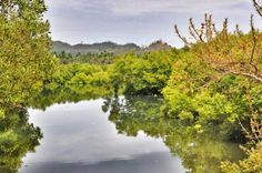 Mangroves at the Looc Port in Tablas Island, Romblon. Imagine living just a stone's throw away from gorgeous sceneries like this one!  Photo from: http://outoftownblog.com/exploring-tablas-island-romblon-romblon-media-tour-day-3